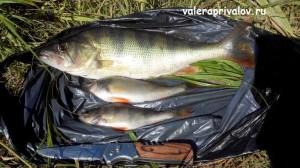 fishing_img_20160620_105020_1