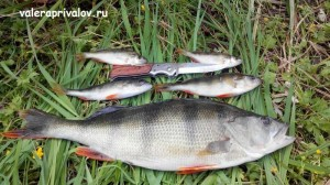 fishing_img_20160621_100544-2-_1